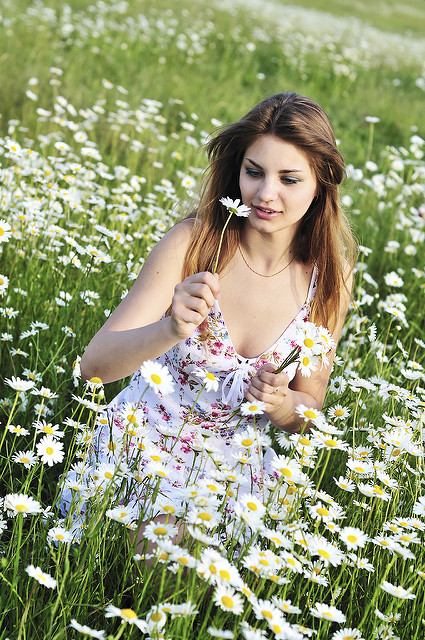 girl collecting bunch of daisies in the daisy field