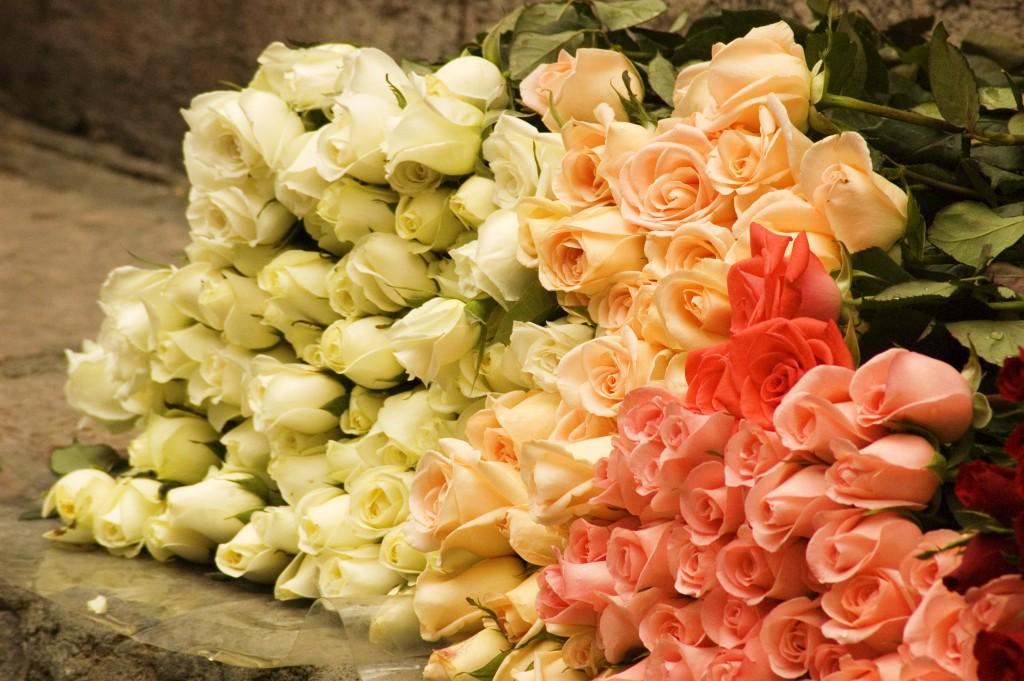 tsveti-ogromniy-buket-roz