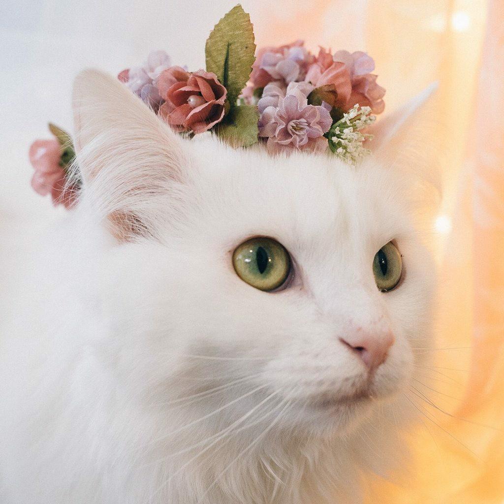 Красивые девушки кошки на аву