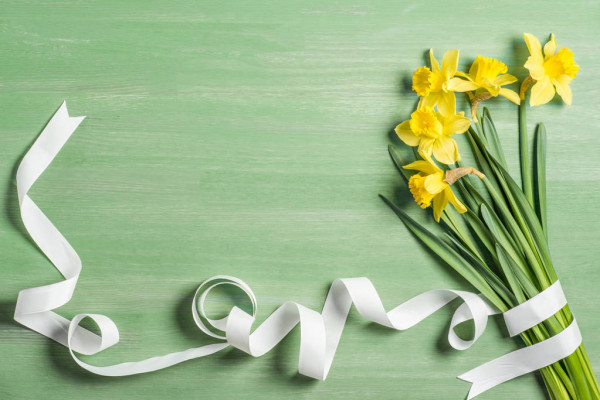 View Bouquet Daffodils Wrapped White Ribbon Green Background — стоковое фото